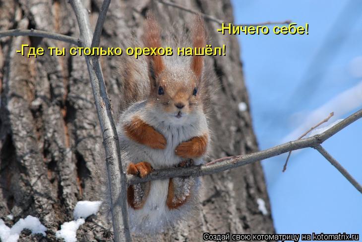 Котоматрица: -Ничего себе! -Где ты столько орехов нашёл!