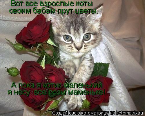 Котоматрица: А пока я котик маленький я несу  все розы маменьке! Вот все взрослые коты  своим бабам прут цветы.