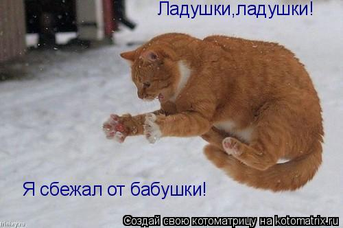 http://kotomatrix.ru/images/lolz/2009/03/20/Fw.jpg