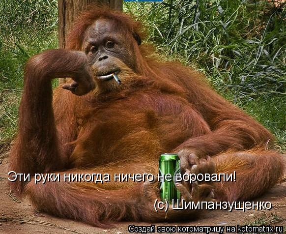 Котоматрица: Эти руки никогда ничего не воровали! (с) Шимпанзущенко