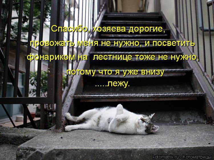 Котоматрица: Спасибо, хозяева дорогие, провожать меня не нужно, и посветить  потому что я уже внизу .....лежу. фонариком на  лестнице тоже не нужно,