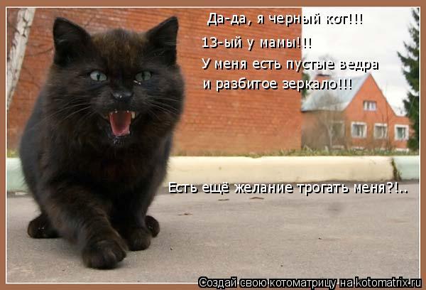 Котоматрица: Да-да, я черный кот!!! 13-ый у мамы!!! У меня есть пустые ведра  и разбитое зеркало!!! Есть ещё желание трогать меня?!..