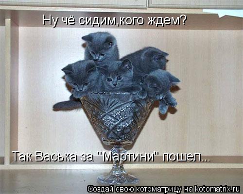 """Котоматрица: Ну чё сидим,кого ждем? Так Васька за """"Мартини"""" пошел..."""