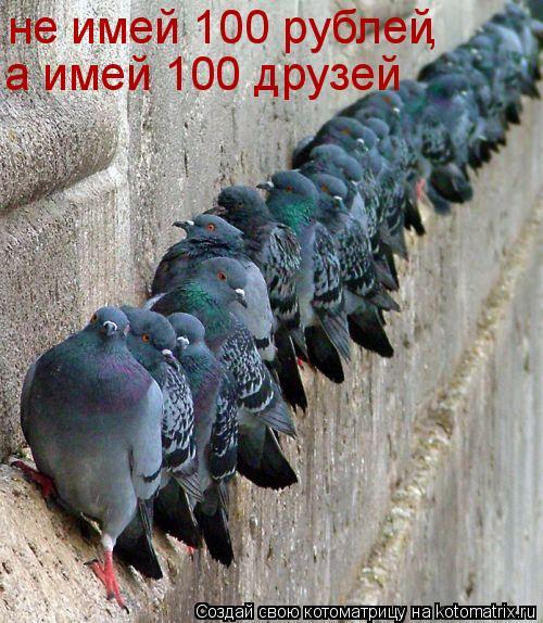 Котоматрица: не имей 100 рублей , а имей 100 друзей