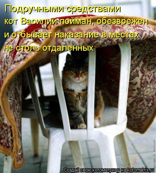 Котоматрица: Подручными средствами кот Василий пойман, обезврежен и отбывает наказание в местах не столь отдаленных