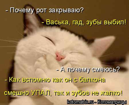 Котоматрица: смешно УПАЛ, так и зубов не жалко! - Как вспомню как он с балкона - А почему смеюсь? - Васька, гад, зубы выбил! - Почему рот закрываю?