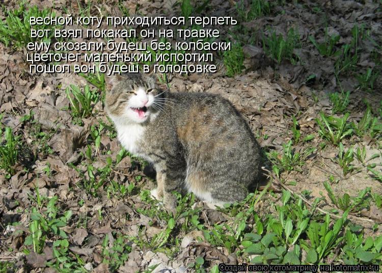 Котоматрица: весной коту приходиться терпеть вот взял покакал он на травке ему скозали будеш без колбаски цветочег маленький испортил пошол вон будеш в