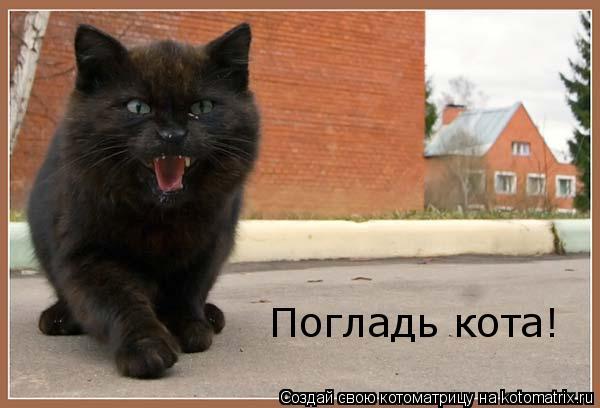 Котоматрица: Погладь кота! Погладь кота, сука! Погладь кота! Погладь кота!