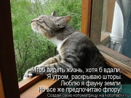 Котоматрица: Чтоб видеть жизнь, хотя б вдали, Я утром, раскрываю шторы. Люблю я фауну земли, Но все же предпочитаю флору!