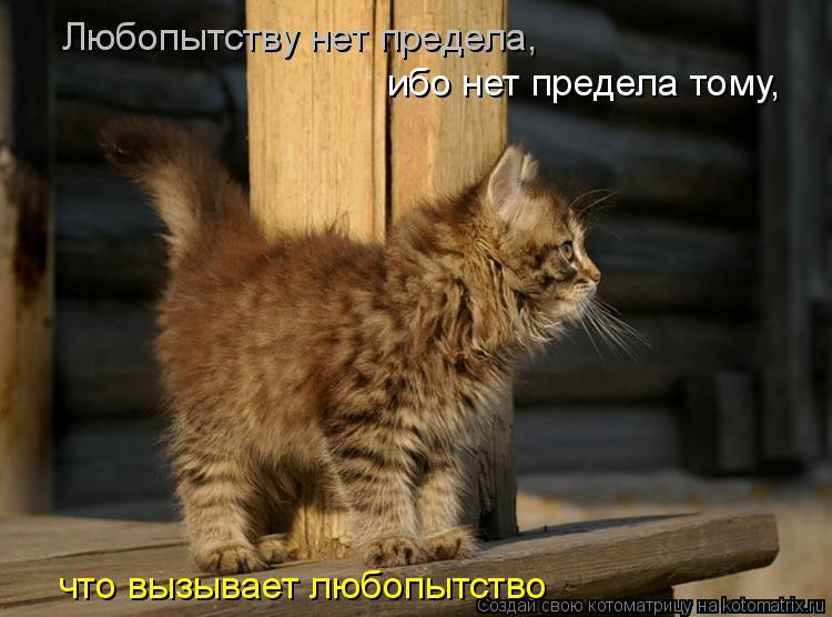 Котоматрица: Любопытству нет предела,  ибо нет предела тому,  что вызывает любопытство