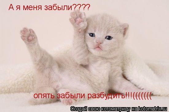 Котоматрица: А я меня забыли???? опять забыли разбудить!!!(((((((
