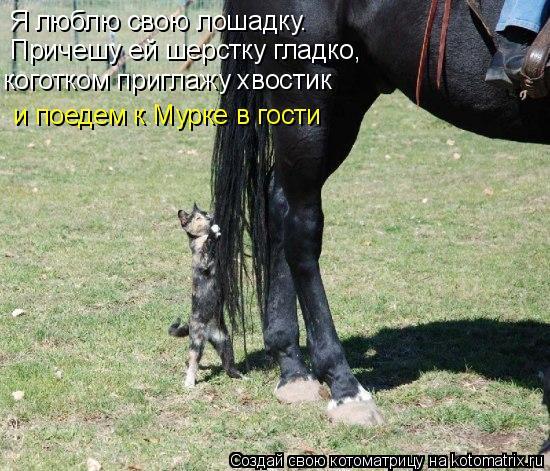 Котоматрица: Я люблю свою лошадку.  Причешу ей шерстку гладко, коготком приглажу хвостик  и поедем к Мурке в гости