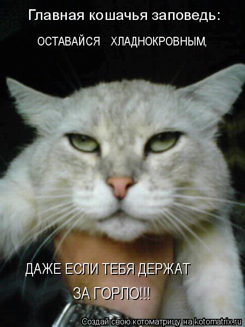 Котоматрица: Главная кошачья заповедь: Главная кошачья заповедь: ОСТАВАЙСЯ    ХЛАДНОКРОВНЫМ, ДАЖЕ ЕСЛИ ТЕБЯ ДЕРЖАТ  ЗА ГОРЛО!!!