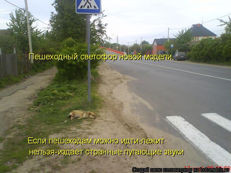 Котоматрица: Пешеходный светофор новой модели Если пешеходам можно идти-лежит нельзя-издаёт странные пугающие звуки