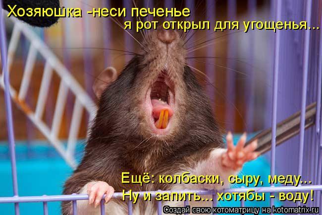 Котоматрица: Ну и запить... хотябы - воду! Хозяюшка -неси печенье  я рот открыл для угощенья... Ещё: колбаски, сыру, меду...