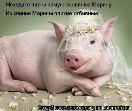 Котоматрица: Неходите парни замуж за свинью Марину Из свиньи Марины плохие отбивные!