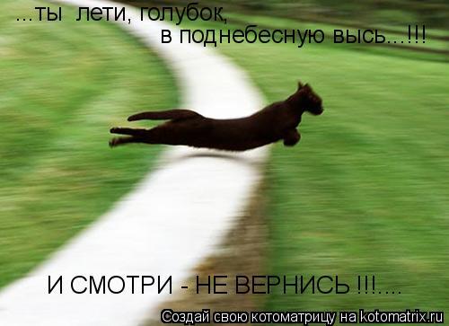 Котоматрица: ...ты  лети, голубок, в поднебесную высь...!!! И СМОТРИ - НЕ ВЕРНИСЬ !!!....
