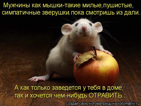 Котоматрица: Мужчины как мышки-такие милые,пушистые, симпатичные зверушки пока смотришь из дали... А как только заведется у тебя в доме, так и хочется чем-