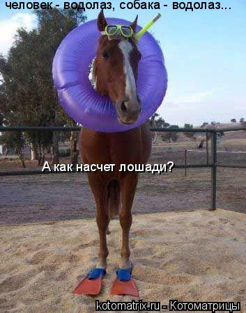 Котоматрица: человек - водолаз, собака - водолаз... А как насчет лошади?