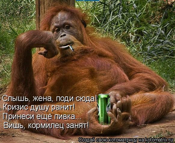 Котоматрица: Слышь, жена, поди сюда! Кризис душу ранит! Принеси ещё пивка... Вишь, кормилец занят!