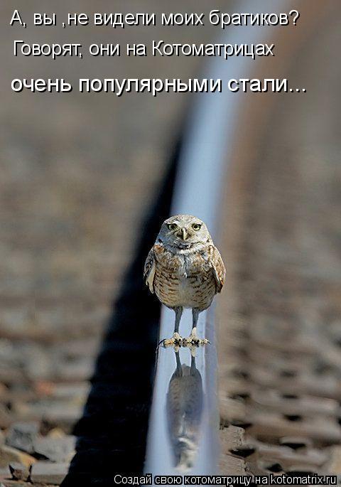 Котоматрица: А, вы ,не видели моих братиков? Говорят, они на Котоматрицах  очень популярными стали...