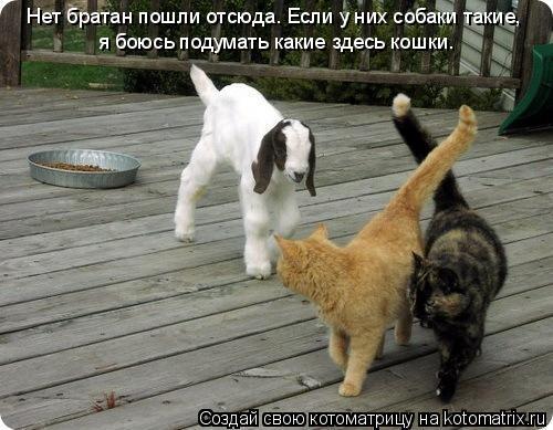 Котоматрица: Нет братан пошли отсюда. Если у них собаки такие, я боюсь подумать какие здесь кошки.
