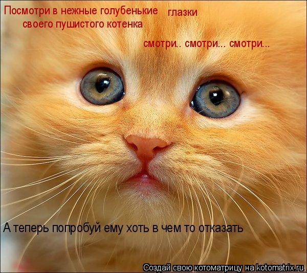 Котоматрица: Посмотри в нежные голубенькие  глазки  своего пушистого котенка смотри.. смотри... смотри... А теперь попробуй ему хоть в чем то отказать