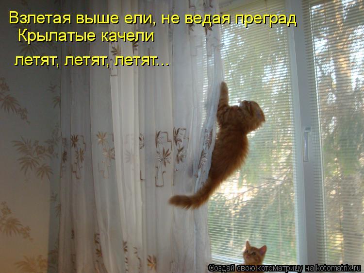 Котоматрица: Взлетая выше ели, не ведая преград Крылатые качели летят, летят, летят...