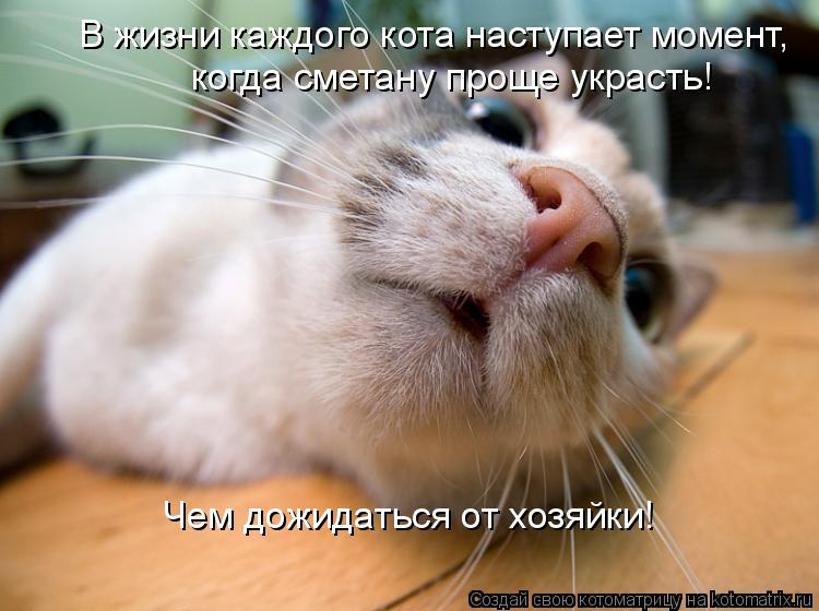 Котоматрица: В жизни каждого кота наступает момент, когда сметану проще украсть! Чем дожидаться от хозяйки!