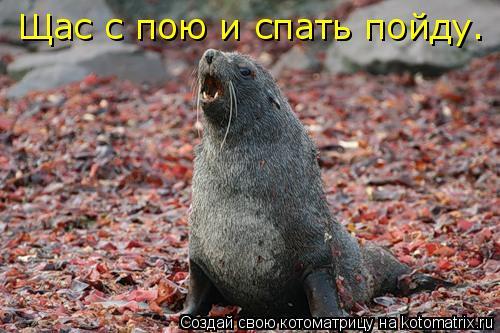 Котоматрица: Щас с пою и спать пойду.