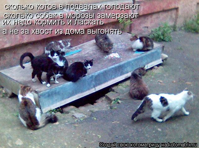 Котоматрица: сколько котов в подвалах голодают сколько собак в морозы замерзают а не за хвост из дома выгонять их надо кормить и ласкать