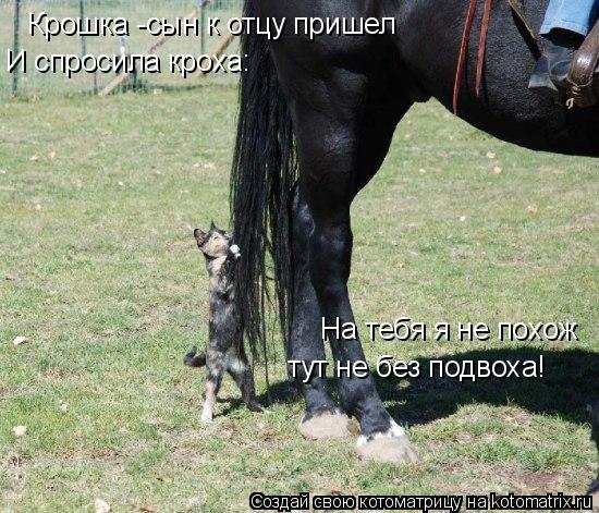 Котоматрица: Крошка -сын к отцу пришел И спросила кроха: На тебя я не похож тут не без подвоха!