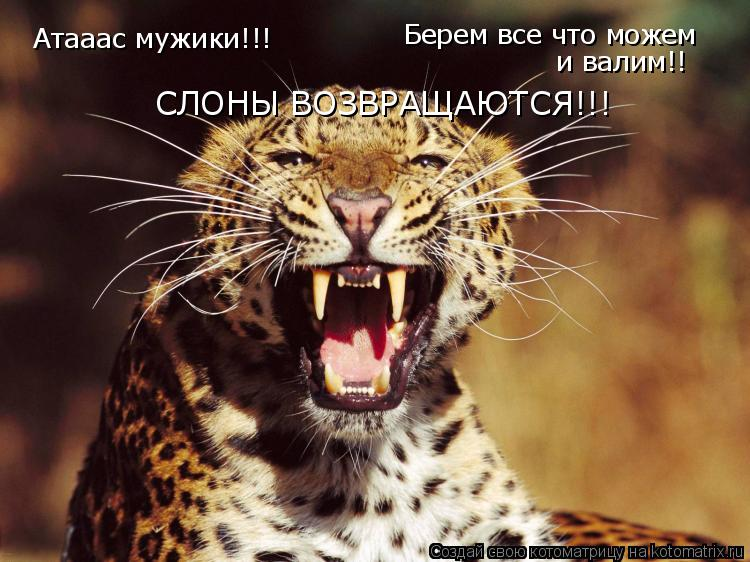 Котоматрица: Атааас мужики!!! Берем все что можем и валим!! СЛОНЫ ВОЗВРАЩАЮТСЯ!!!