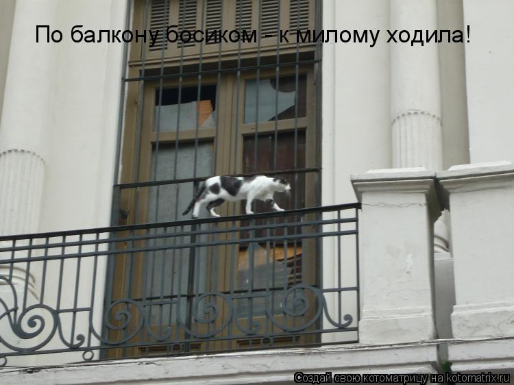 Котоматрица: По балкону босиком - к милому ходила!