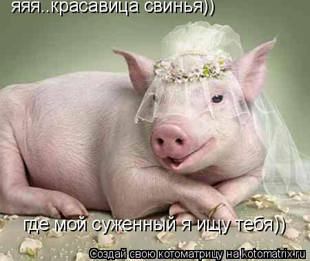 Котоматрица: яяя..красавица свинья)) где мой суженный я ищу тебя))
