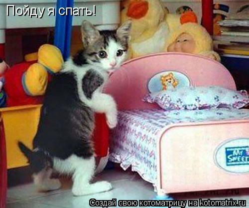Кошка анархистка.