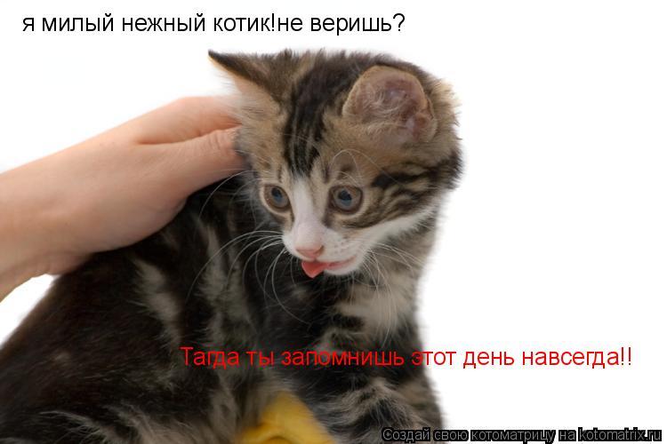 Котоматрица: я милый нежный котик!не веришь? Тагда ты запомнишь этот день навсегда!!