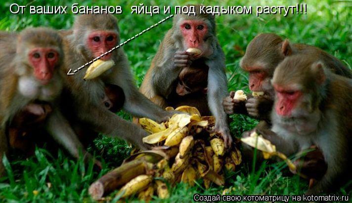 Котоматрица: От ваших бананов яйца и под кадыком растут!!! <--------------------------