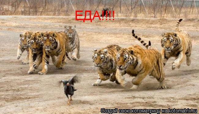 Котоматрица: ЕДА!!!!