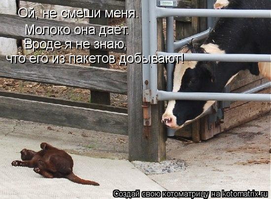 Котоматрица: Молоко она даёт. Ой, не смеши меня. Вроде я не знаю,  что его из пакетов добывают!