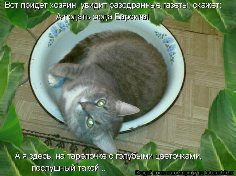 Котоматрица: Вот придет хозяин, увидит разодранные газеты, скажет:  А подать сюда Барсика! А я здесь, на тарелочке с голубыми цветочками, послушный такой..