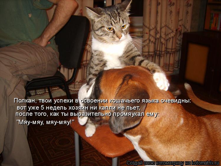 Котоматрица: Полкан, твои успехи в освоении кошачьего языка очевидны: вот уже 5 недель хозяин ни капли не пьет, после того, как ты выразительно промяукал