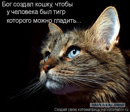 Котоматрица: Бог создал кошку, чтобы у человека был тигр которого можно гладить...