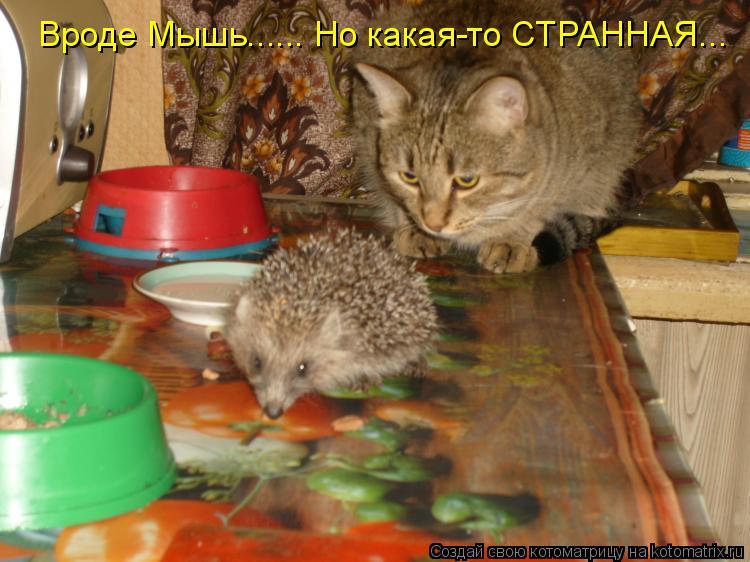 Котоматрица: Вроде Мышь...... Но какая-то СТРАННАЯ...