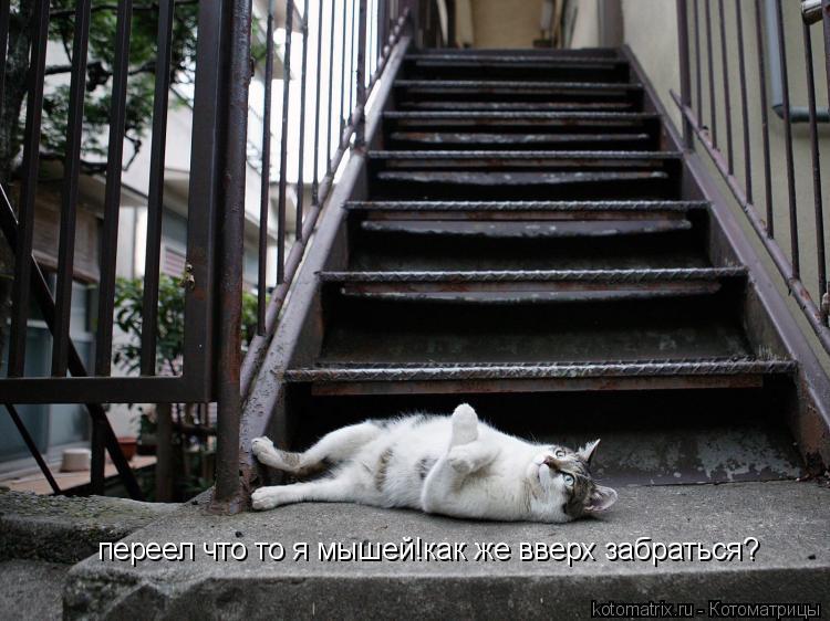 Котоматрица: переел что то я мышей!как же вверх забраться?