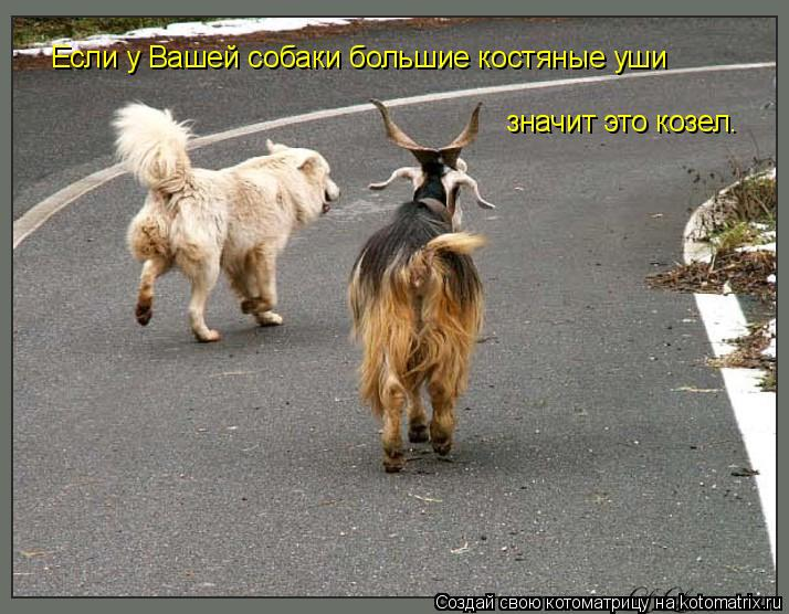 Котоматрица: Если у Вашей собаки большие костяные уши значит это козел.