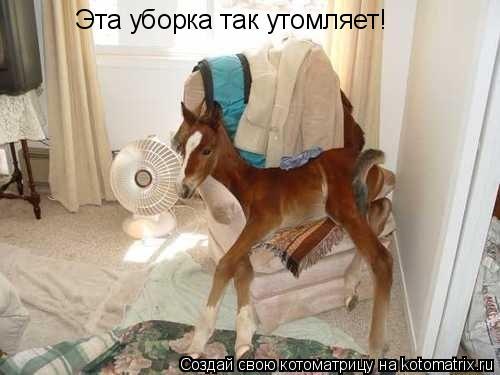 Котоматрица: Эта уборка так утомляет!