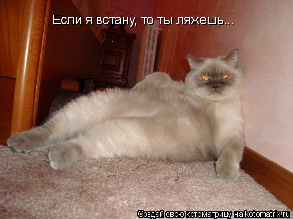 Котоматрица: Если я встану, то ты ляжешь...