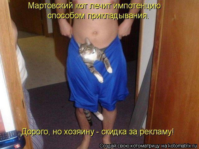 Котоматрица: Мартовский кот лечит импотенцию  способом прикладывания. Дорого, но хозяину - скидка за рекламу!