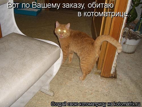 Котоматрица: Вот по Вашему заказу, обитаю  в котоматрице..